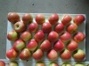 gala apple,red star apple,fuji apple,golden delicious apple
