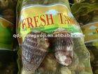 Taro Fresh, China Eddo Roots 2012 New crop fresh taro