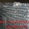 galvanized iron wire mesh (Shengli Peter)