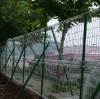 competitive price welded wire mesh fence( Direct factory)