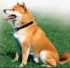 Dog Mist-spray barking-stop device