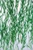 translucent vegetation resin sheet