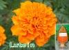 Marigold Extract Lutein, Marigold Powder Lutein