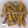 Coptis chinensis P.E.