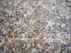 shell chips for terrazzo flooring