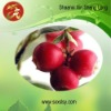 Cranberry anthocyanins 25% UV(GMP Certification)