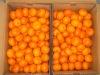 Super Sweet Juciy Baby Mandarin