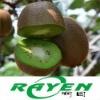 Chinese Kiwi Fruit