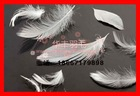 30%washed white duck feather 30/70 Janpanese standard
