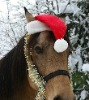 Animated santa hat for horse wearing