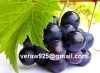 Natural grape seed extract,proanthocyanidins