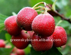 High quality of Hawthorn Extract with 7% flavone
