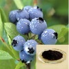 Blueberry Extract 25% Anthocyanidins