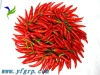 Chinese dried raw red chilli