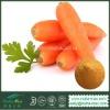 1%~99% Beta Carotene Carrot Extract Powder