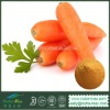 1%~99% Beta Carotene Carrot Extract Powder