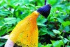 2012 new research robust seasoned edible bamboo fungus