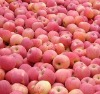 Selected Quality Fuji Apple