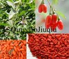 ECOCERT Certified Ningxia Organic wolfberries healthy food