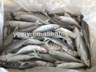 frozen mackerel fish high quality mackerel ice fish 300g