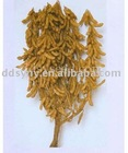 Shengyuan da dou wang seed, the King of soybean seed of Shengyuan .