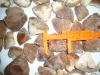 Best Quality Frozen Shiitake Mushroom