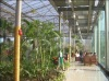 multi-span solar agricultural greenhouses