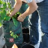 PET eco garden bag for planting magic bean