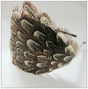 Heaband feather