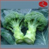 IQF Broccoli in block
