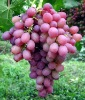 ANTHOCYANIN Grape Skin Red Color Natural Food Color Organic Pigment