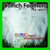 BEST Selected Prime Quality 22-24inch(55-60cm) Wholesale White Ostrich Feathers for wedding decor