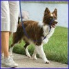 Pet Collar, Pet Flexible Leashes, Dog PVC Collar Leash APD-006