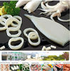 Frozen seafood todarodes squid U5 whole clean