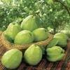 guava powder