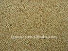 yellow broomcorn millet high quality