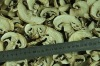 Dehydrated Champignon Mushroom Slice
