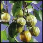 Garcinia Cambogia P.E(HCA 60%)