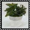 artificial tropical succulent plant