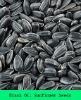 black oil sunflower seeds