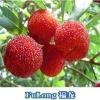 Fresh Bayberry
