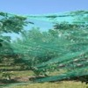 Crop Protection Plastic Nets
