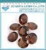 best gemstone supplier coffee brown round cubic zricon