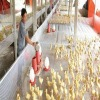 chicken brooder wire mesh cage