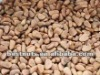 pinenuts kernel