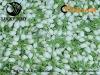 Chinese organic jasmine flower