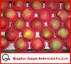JQ Fresh Red Fuji Apples Wholesale