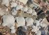 carved granite stone turtles