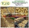competitive price fresh potato