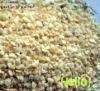 8-16mesh Garlic granules